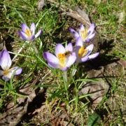 Blumen Achtsamkeit